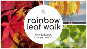 rainbow leaf walk
