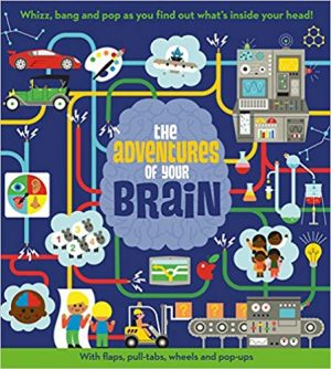brain e1533054402721