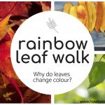 rainbow leaf walk